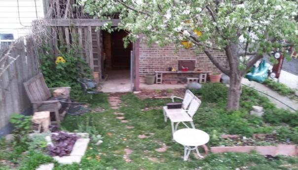 Apple tree: 5/11/14