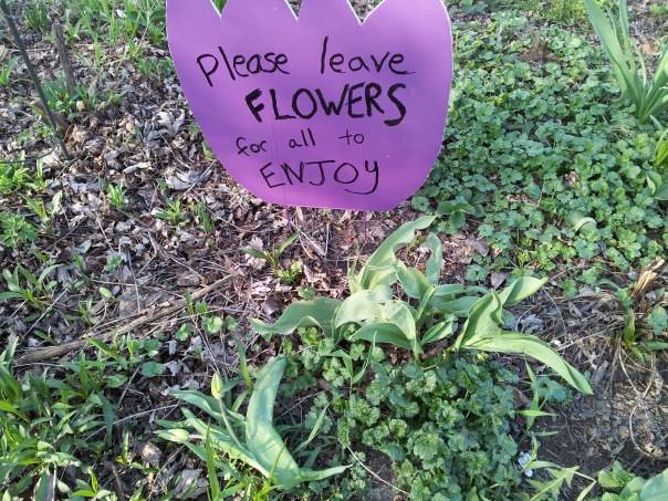 The day after I put up this sign, I found an upended tulip on the ground in front of it. There won;t be a sign this year, and I won't stress about what happens.